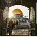 أبو ردينة: الشعب الفلسطيني أسقط